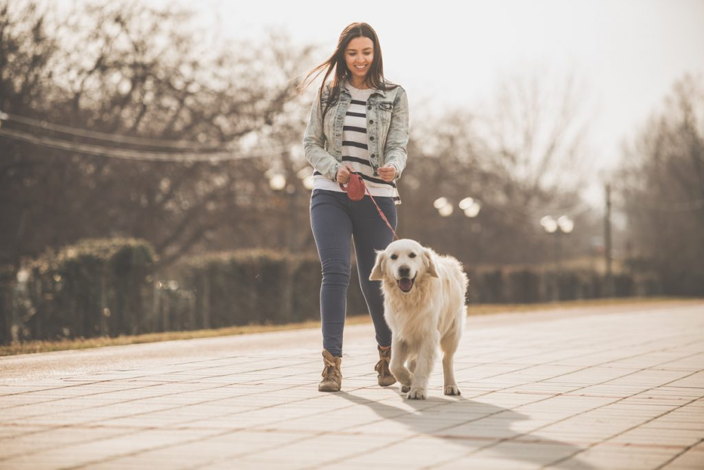Golden Retriever en promenade