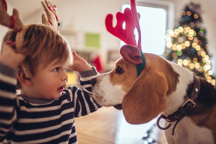 Beagle qui joue avec un enfant