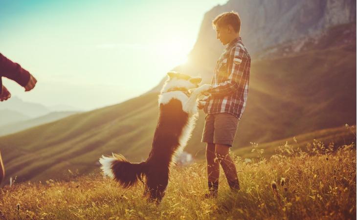 Border Collie et un enfant qui jouent au coucher du soleil