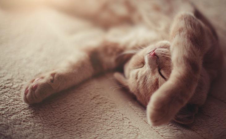 Chaton roux adorable endormi