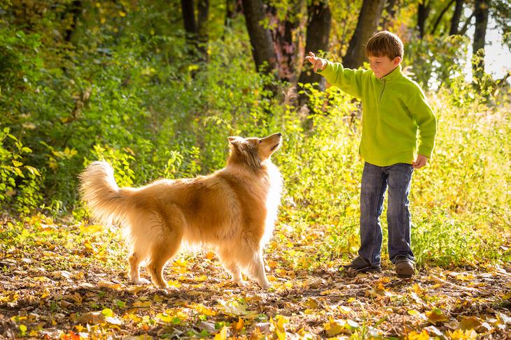 Chien Colley qui joue avec un enfant