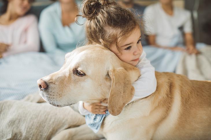 Une enfant qui câline un Labrador Retriever