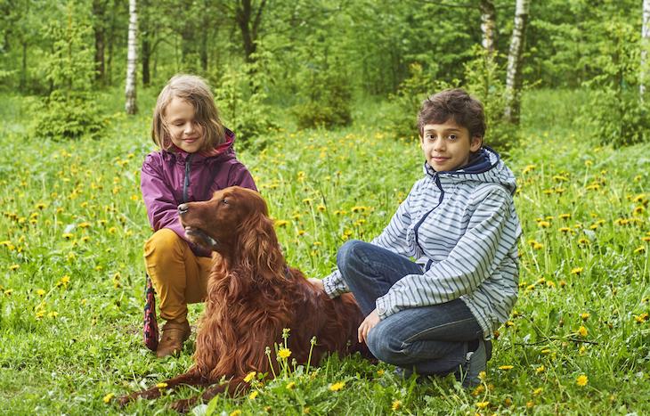 Setter irlandais dans la nature avec des enfants
