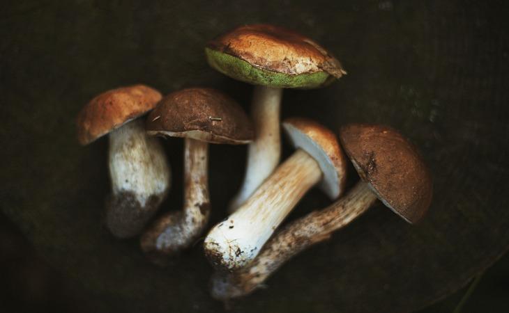 Les champignons sont des aliments dangereux pour la santé des chats