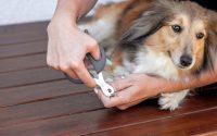 Comment couper les griffes du chien ?