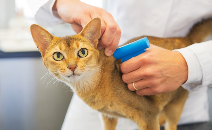 Identification du chat
