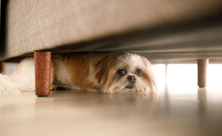 Chien qui se cache sous le lit car il a peur