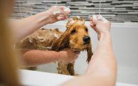 Comment laver un chien ?