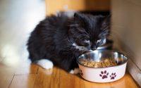 Gamelle classique en inox pour chaton