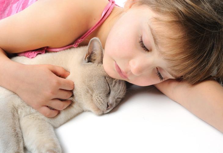 Chat de race Burmese faisant la sieste avec un enfant.