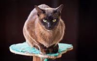 chat perché en hauteur