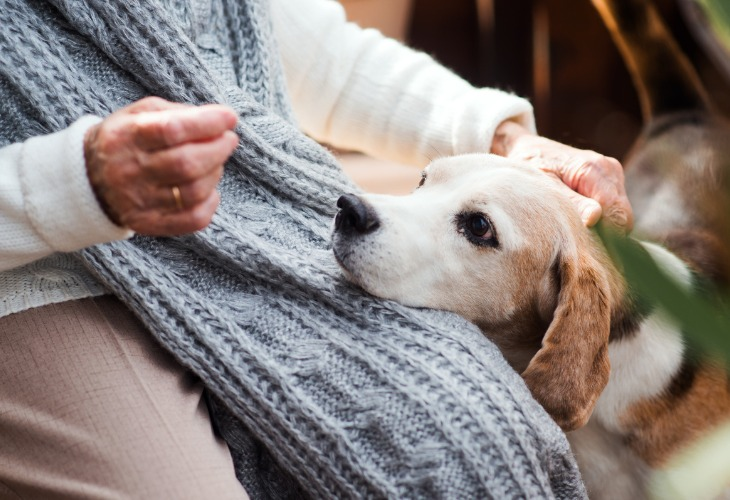 Votre animal ressent votre l'énervement de l'humain, la caresse est à éviter.