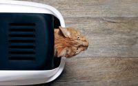 Comment choisir la litière de mon chat ?