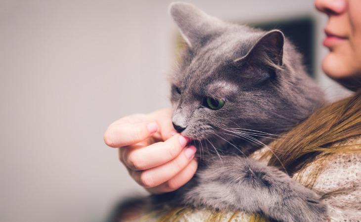 chat lèche propriétaire