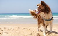 dangers pour votre chien à la plage