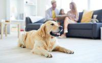devenir famille d'accueil pour chien