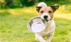 Comprendre les besoins nutritionnels du chien
