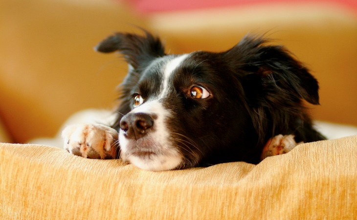 Comment savoir si mon chien est stressé ?