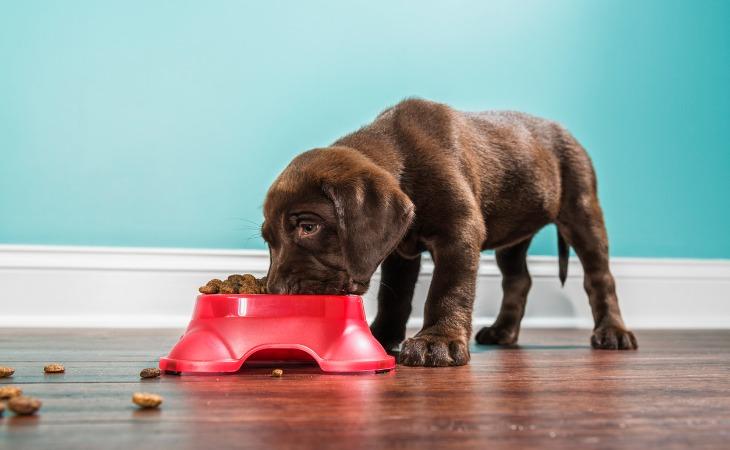 besoins nutritionnels chiens alimentation