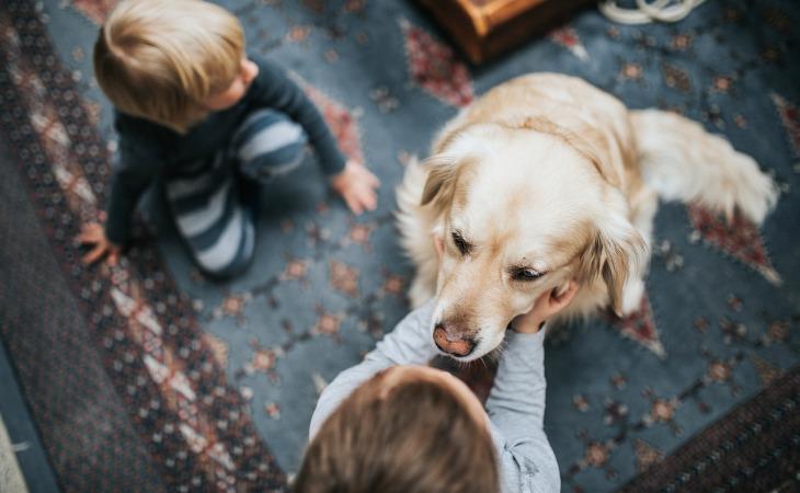 famille d'accueil chien
