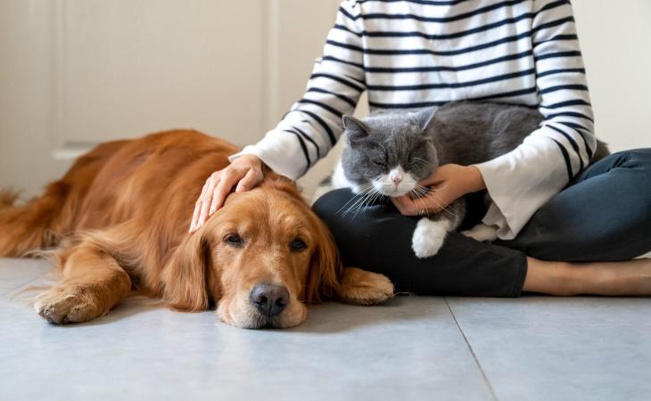 accueil chien famille