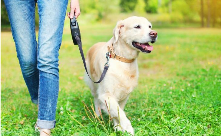 promenade chien laisse