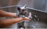 Comment laver mon chat correctement ?