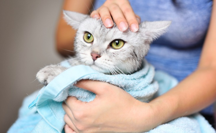 nettoyage lavage chat