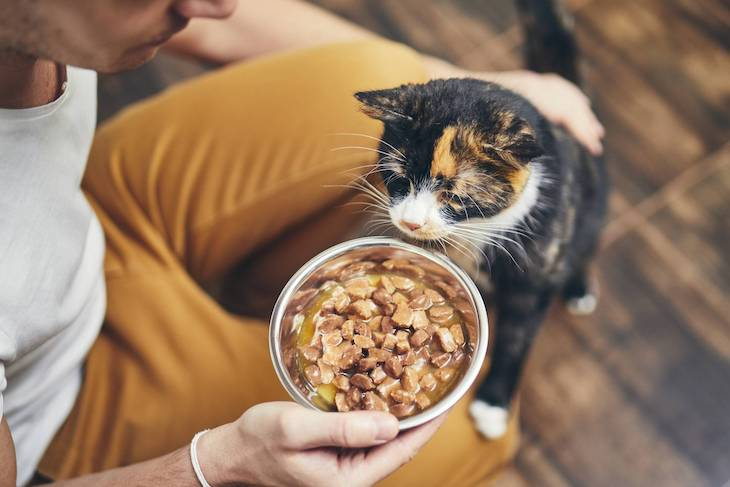 chat qui va manger